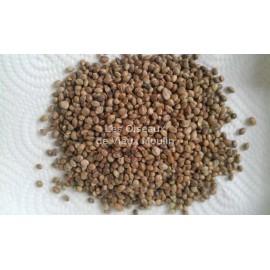Chènevis 2 kg (Graines de chanvre)
